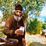 Пчелите и мувите на старец Пајсиј Светогорец