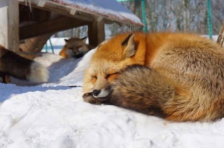 EMGN-Fox-Village-In-Japan-17