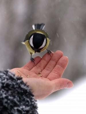 feed-birds