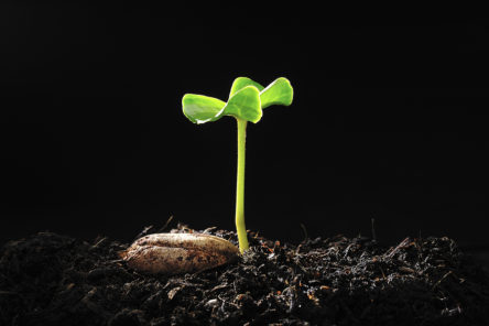 FEATURE-Big-Stock-Plant-New-Life-