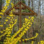 Од Писмата на отец Серафим (Роуз) / Писмо 49-то
