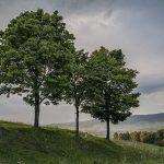 За трите дрва кои мечтаеле да станат големи и силни
